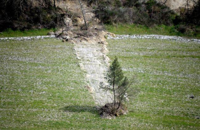 Το δέντρο ταξιδιώτης... όχι δεν είναι αστείο