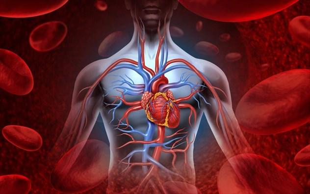 Ποιo είναι το βαρύτερο όργανο στο ανθρώπινο σώμα;