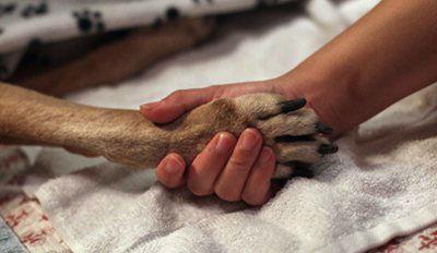 dog hand