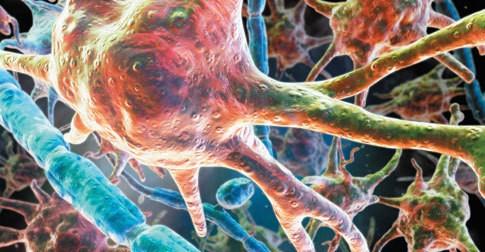 cellnoise_485_206_SSN9gA