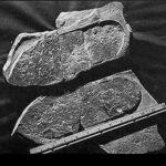 Πάτημα επί τριλοβίτη 500.000.000 ετών!!!