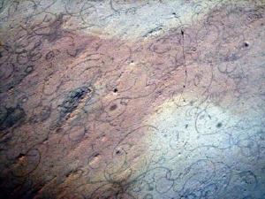 Εμφάνιση της ευκαρυωτικής ζωής «δεν συνέβη πριν από 600 εκατομμύρια χρόνια, αλλά πριν από 2,1 δισεκατομμύρια χρόνια»