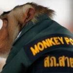 Αστυνομικοί μαϊμού