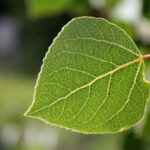 Τεχνητά δέντρα για την απορρόφηση του CO2 αναπτύσσει νομπελίστας χημικός