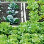 Καλλιέργησε τον δικό σου λαχανόκηπο στο δήμο Νεάπολης- Συκεών