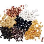 Χανιά   Ανταλλακτήριο παραδοσιακών σπόρων από την ομάδα Σπορίτες