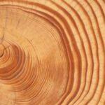 Τεράστια κοσμικά γεγονότα αφήνουν τα ίχνη τους σε αρχαία δέντρα