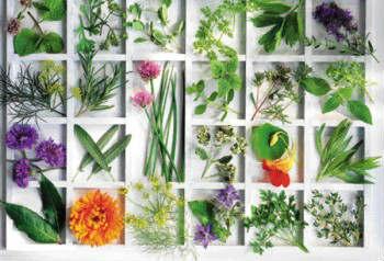 Ένας λουλουδόκηπος θεραπείας και τέχνης στο Μουσείο Γουλανδρή
