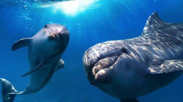 Νέες μελέτες σε δελφίνια και λύκους έδειξαν ότι τα δύο είδη φωνάζουν τους «φίλους» τους με το όνομά τους