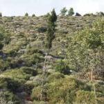 Ανασταίνεται το καμμένο δάσος της Πάρνηθας έξι χρόνια μετά την πυρκαγιά