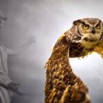 Η Γλαύκα της Θεάς Αθηνάς και ο συμβολισμός της