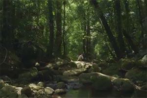 """Ανακαλύφθηκε """"παραδεισένια"""" ζούγκλα στη Μοζαμβίκη"""