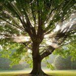 Ο Συμβολισμός του Δέντρου