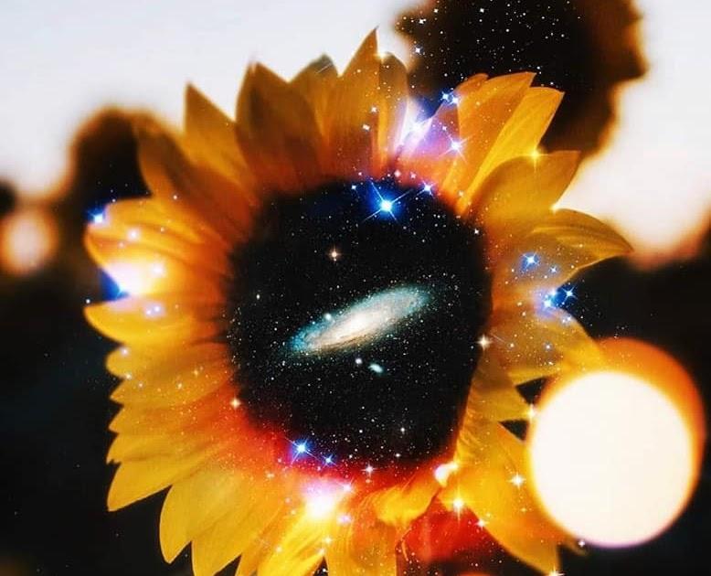 Η αρχή της «κοσμικής συμπάθειας» στην Στωική και Νεοπλατωνική φιλοσοφία