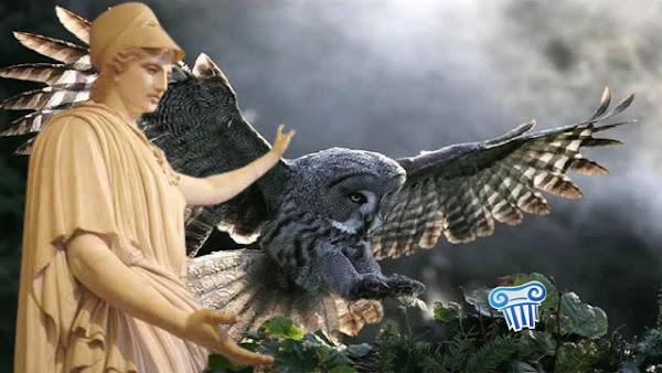 Γλαύκα: Το «Υπερόπλο» της Θεάς Αθηνάς